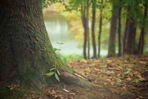 natura drzewo las